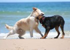 dogs-on-the-beach-1408132_5